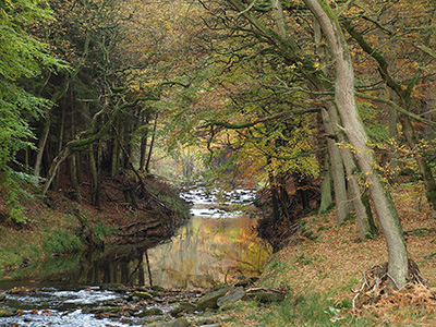 Riparian woodland in autumn near Hawnby Hill . Link to Riparian woodland in autumn near Hawnby Hill .
