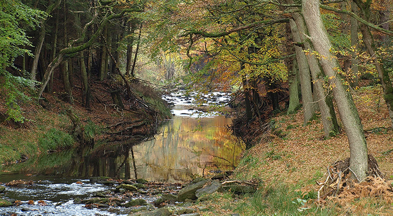 Riparian woodland in autumn near Hawnby Hill