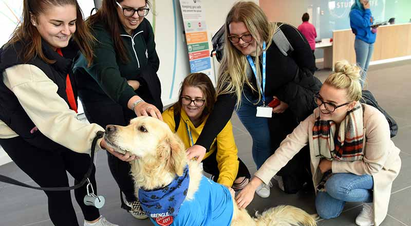 Students meeting Brengle the Therapy Dog