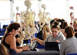 Virtual placements for physiotherapy students